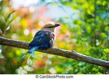 piękny, mały, ptak, posiedzenie, na, niejaki, drzewo gałąź
