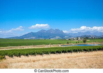 piękny, miasto, afryka, winnica, przylądek, południe