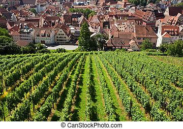piękny, Miasto, Wino, pola,  geman