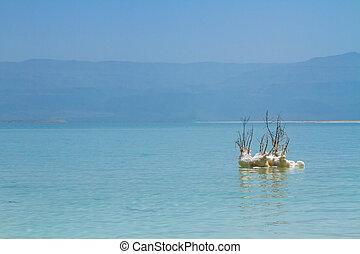 piękny, morze, zmarły, brzeg