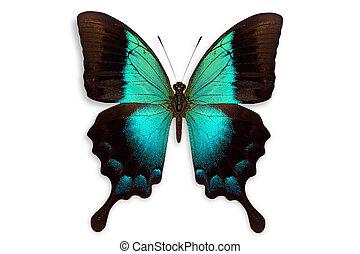 piękny, motyl, tło