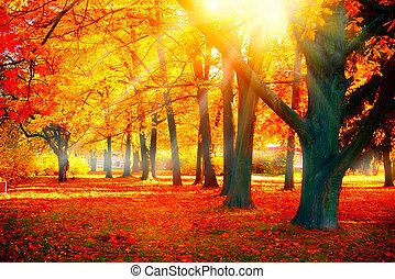 piękny, natura, autumn., park, jesienny, scene., upadek