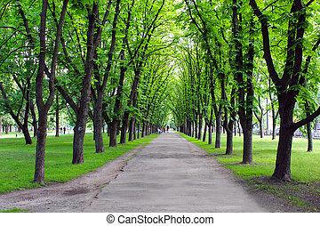 piękny, park, z, dużo, zielone drzewa