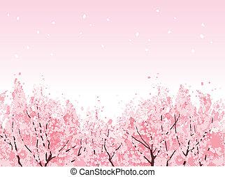 piękny, pełny, kwiat, wiśniowe drzewa, kwiat