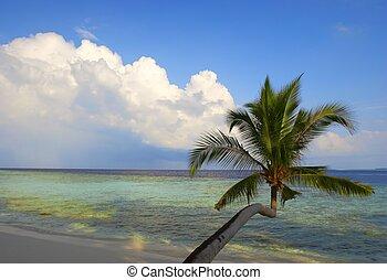 piękny, plaża, dłoń drzewa