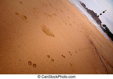 piękny, plaża, prospekt