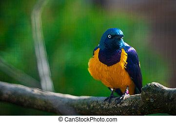 piękny, ptak, posiedzenie, na gałęzi