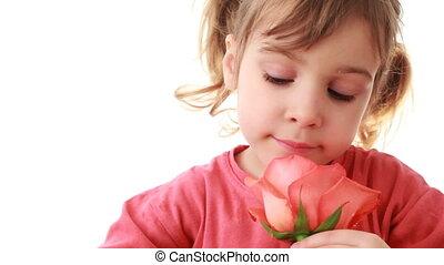 piękny, różowy, mały, róża, dotyka, ręka, czmycha, ...
