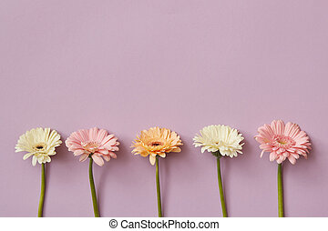piękny, różowy, różny, papier, gerberas, tło, skład