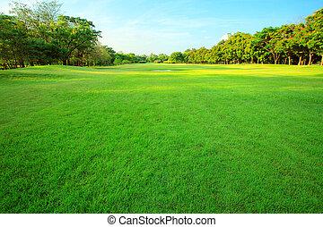 piękny, roślina, trawa, przestrzeń, lekki, wielocelowy, park, drzewo, rano, pole, zielony, perspektywa, świeży, kopia, publiczność