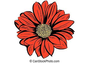 piękny, rozkwiecony, ogrodowy kwiat