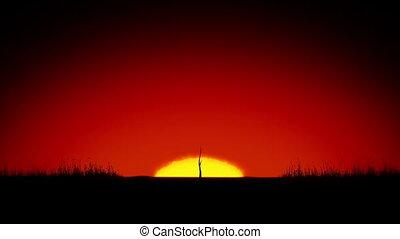 piękny, rozwój, drzewo., wschód słońca
