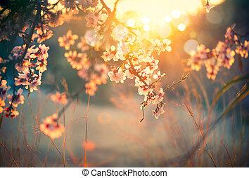 piękny, scena natury, z, rozkwiecony, drzewo, i, słońce migoczą