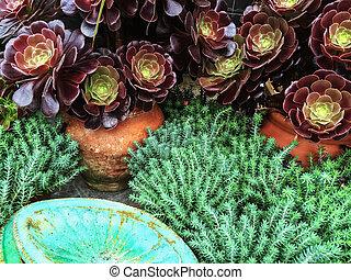 piękny, soczysty, rośliny, w, glina, garnki