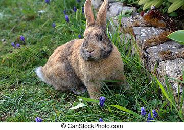 piękny, sprytny, królik, na, niejaki, zielony, lato, meadow.