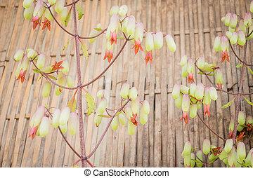 piękny, styl, kwiat, wiosna, rocznik wina, czas
