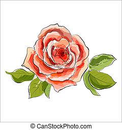 piękny, stylizowany, rose., ilustracja, akwarela, czerwony