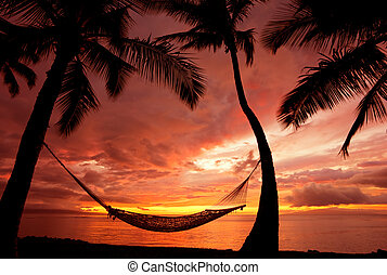 piękny, sylwetka, urlop, drzewa, hamak, dłoń, zachód słońca