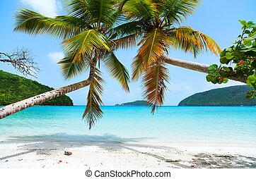 piękny, tropikalna plaża, karaibski