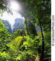 piękny, tropikalny, dżungla, tło, krajobraz, las