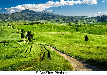 piękny, tuscany, pola, między, ścieżka, prospekt