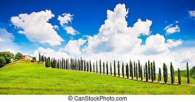 piękny, tuscany, val, dom, d'orcia, pagórek, krajobraz