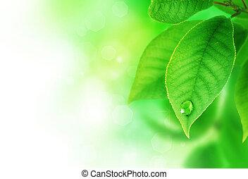 piękny, wiosna, liście, brzeg