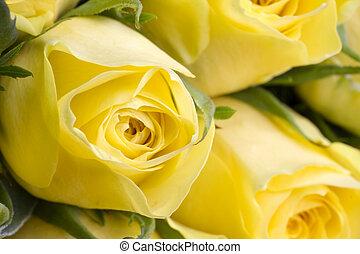 piękny, wizerunek, do góry, żółte róże, zamknięcie