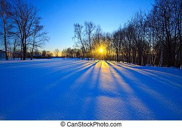 piękny, zachód słońca, las, zima