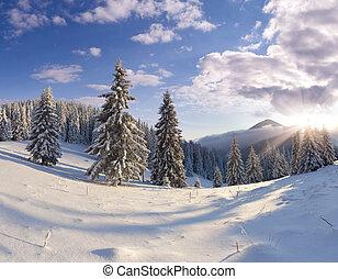 piękny, zima, drzewa., śnieg zaległ, krajobraz