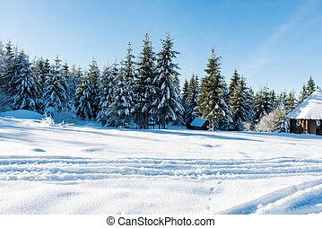 piękny, zima krajobraz, na, niejaki, słoneczny dzień
