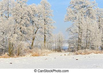 piękny, zima krajobraz