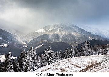 piękny, zima krajobraz, z, śnieg nakrył drzewa