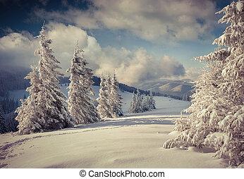 piękny, zima krajobraz, z, śnieg zaległ, drzewa.