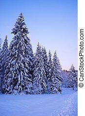 piękny, zima, krajobraz.