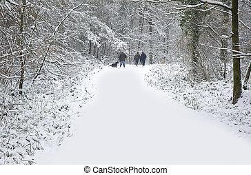 piękny, zima, las, śniegowa scena, z, głęboki, dziewiczy śnieg, i, rodzina piesza, psy, na, ścieżka, pasaż