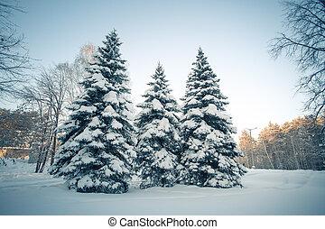 piękny, zima, las