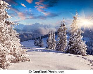 piękny, zima, sinrise, z, śnieg zaległ, drzewa.