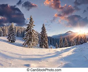 piękny, zima, wschód słońca, z, śnieg zaległ, drzewa.
