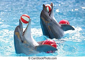 piłki, delfiny