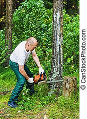 piłowanie, drewno, człowiek, chainsaw, las
