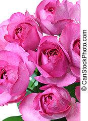piaget, rosa, yves