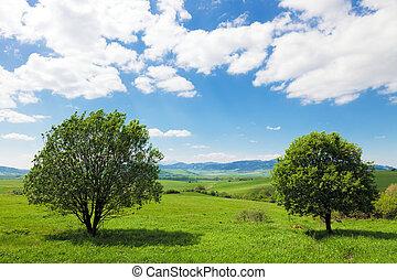 pianeta, verde, -, terra