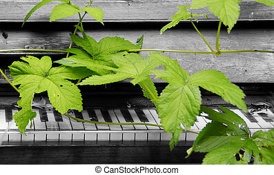 piano and nature