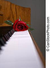 Piano Rose on Keys