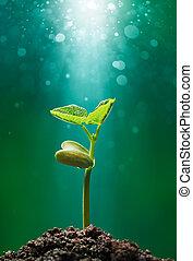 pianta, con, raggio sole