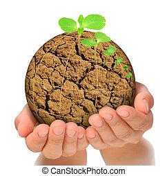 pianta, concetto, evoluzione, pianeta, bruciato, crescente, mani, fuori