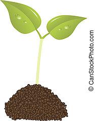 pianta, concetto, vita, giovane, vettore, nuovo