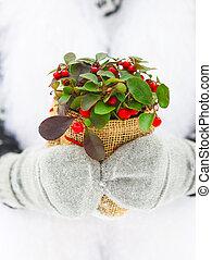 pianta, donna, inverno, lei, presa a terra, mani