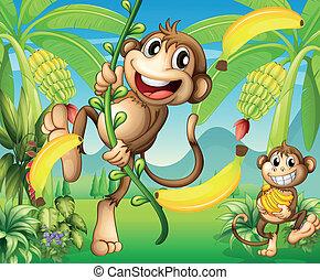 pianta, due, banana, scimmie